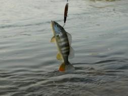 Pesca-Esportiva-Peixe-Arquipelago-do-Tropeço_Arquivo-ADTUR