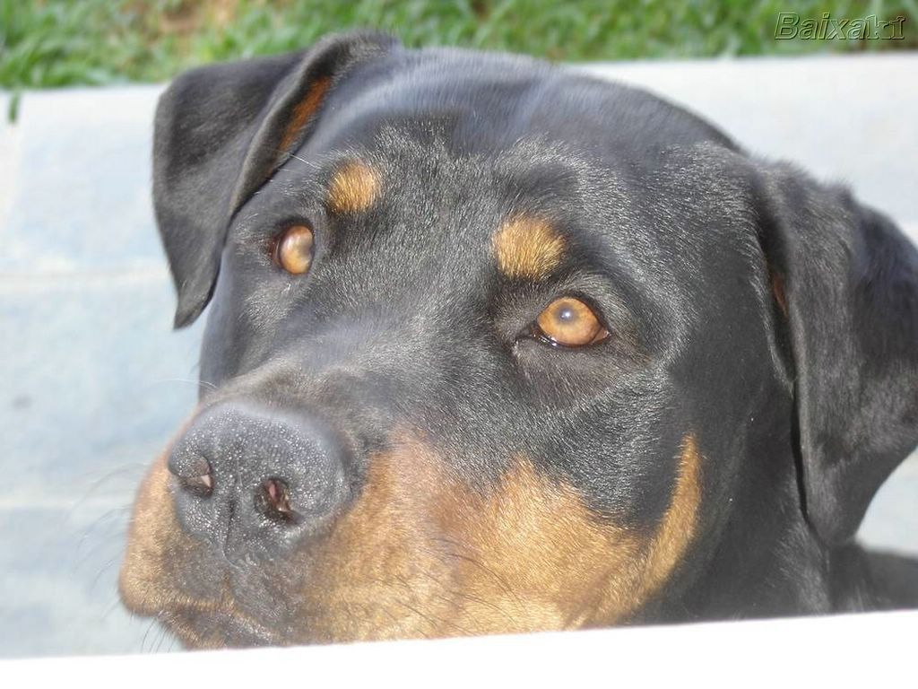 Nos EUA, um cão já foi condenado à prisão perpétua. Você sabia?