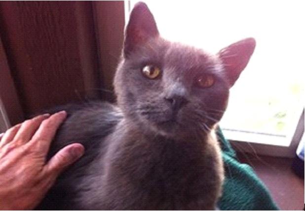Mulher encontra gato que havia perdido há quase 3 anos