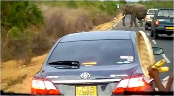 """Elefante cobra pedágio e só libera trânsito após """"pagamento"""""""