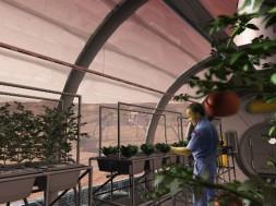 plantas-marte-lua-simulador-solo