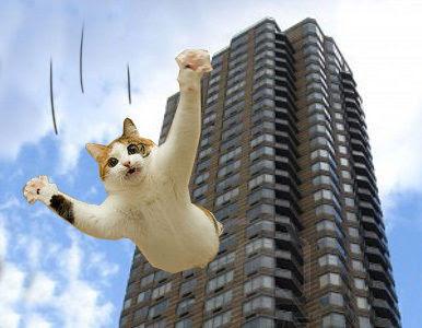 Gato sobrevive após cair de uma altura de 27 metros