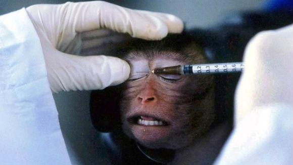 """Granja de """"humanos artificiais"""" pode ser o fim dos experimentos com animais"""