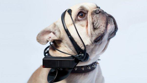 Conheça o aparelho revolucionário que traduz os pensamentos dos cães