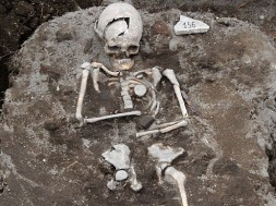 Esqueleto na bulgária