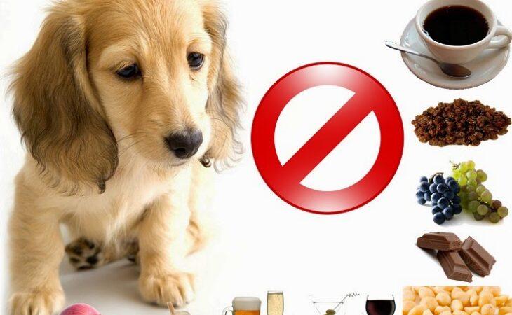 10 alimentos proibidos para cães