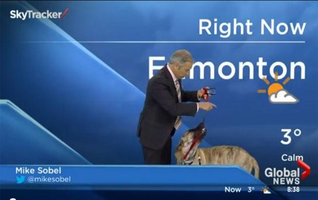 Cão rouba a cena em programa de TV no Canadá