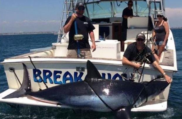 Apresentador de TV entra para o Guiness Book após pescar tubarão de 367 quilos