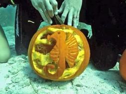 underwater-pumpkin-ca_fran1