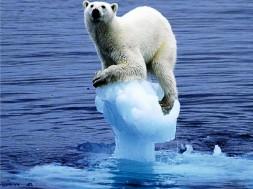 urso polar sofre com as mudanças climáticas