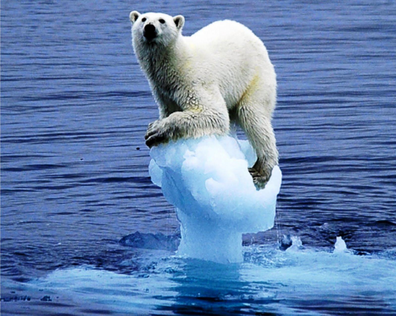 A sexta extinção em massa da Terra será causada pelo homem