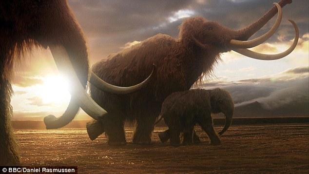 Mamutes podem ser clonados e trazidos de volta à vida, dizem cientistas