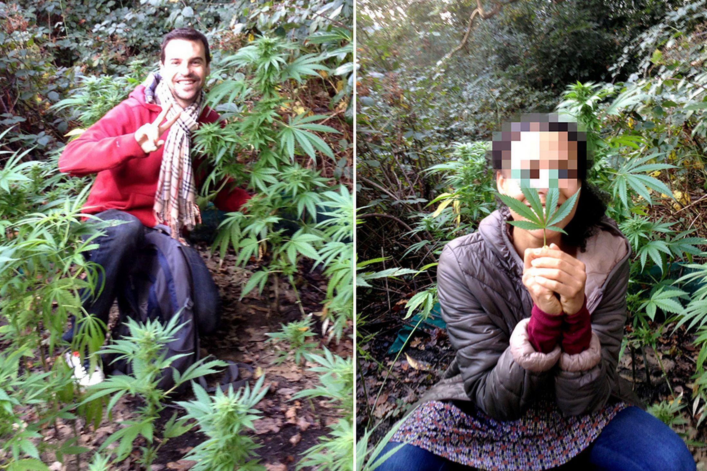 Casal encontra plantação secreta de maconha ao sair para caçar cogumelos na floresta