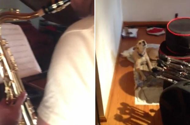 Cão 'cantor' faz sucesso na web