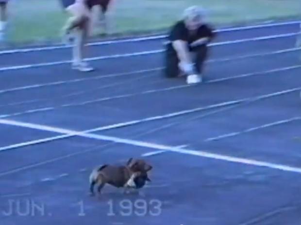 Vídeo de cão 'trapaceiro' se torna sucesso na web