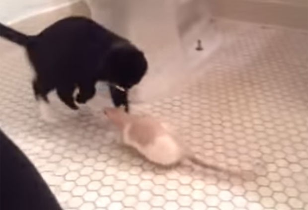 Vídeo de gato medroso é sucesso na web