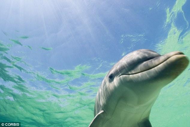 Pesquisadores descobrem que golfinhos se identificam com assobios