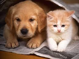 Organização envia abaixo – assinado para parlamento suiço pedindo o fim do consumo da carne de cães e gatos na Suiça