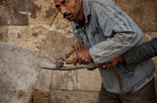 Egípcio ganha fama por exercer uma profissão diferente