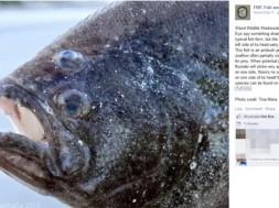 peixe estranho