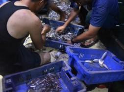 pescadores de Gaza