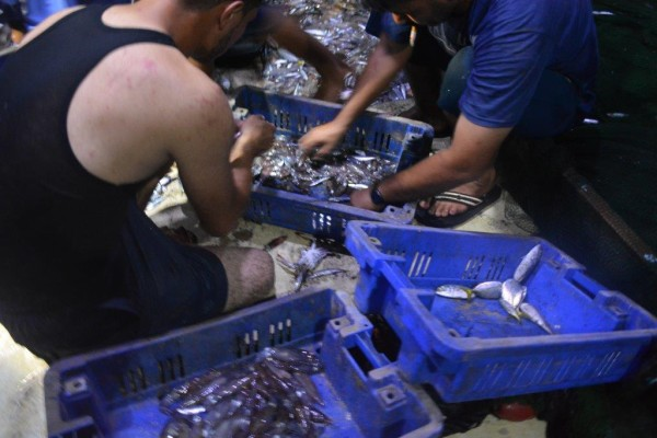 Israel permite que pescadores de Gaza exportem pescado para a Cisjordânia pela primeira vez desde 2007