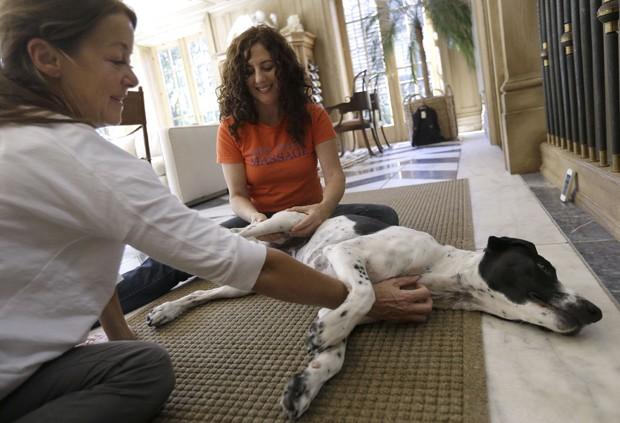 Massagem em cães está se tornando popular entre os norte-ameircanos