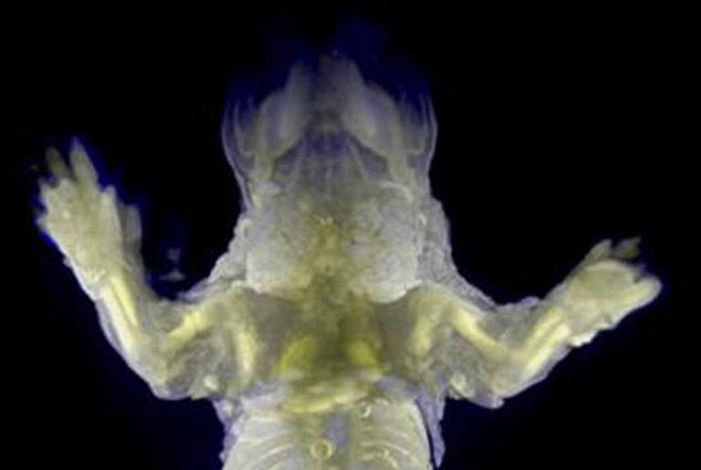 """Cientistas criam ratos """"invisíveis"""" para entender melhor como o câncer se desenvolve"""