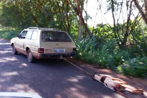 Motorista arrasta cachorro por avenida e causa revolta em moradores