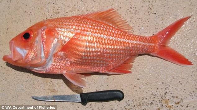 Recorde: Cientistas encontram peixe com 84 anos de idade