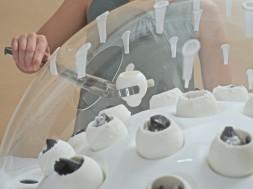 Fungi Mutarium, Livin Studio