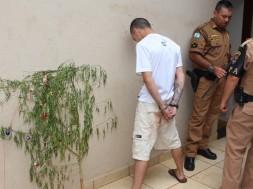"""Polícia captura pé de maconha """"travestido"""" de árvore de natal, no Paraná"""