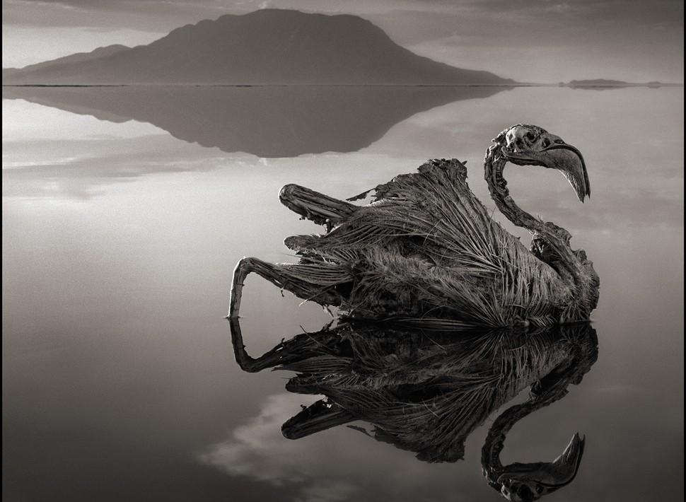 Animais viram pedra ao tocar um lago na Tanzânia