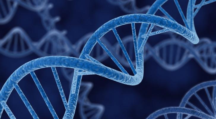 Cientistas descobrem gene que destrói as células doentes prolongando o tempo de vida