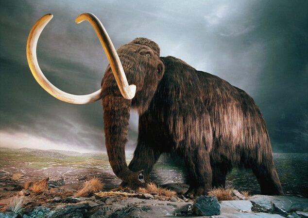 Nova pesquisa científica revela que os mamutes foram mortos por seres humanos