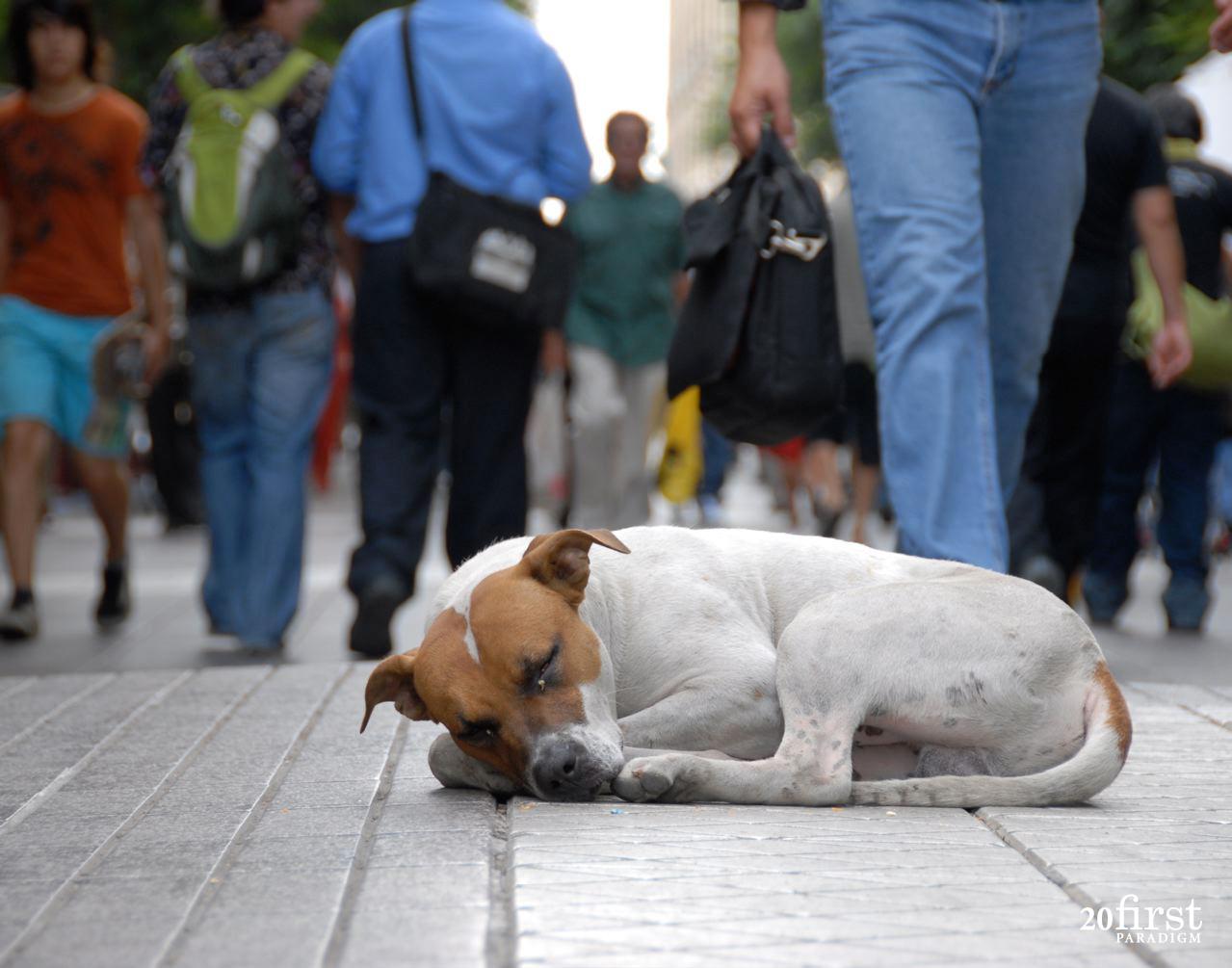 Justiça determina que Município do RN providencie abrigo para animais de rua