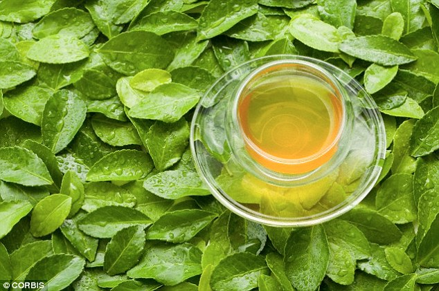 Cientistas descobrem que chá verde pode matar as células cancerosas