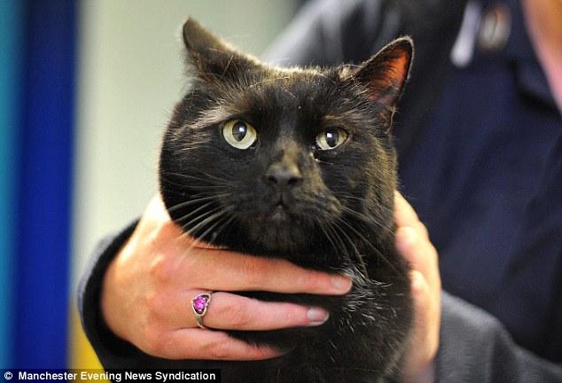Gato fica preso em motor de carro e sobrevive a uma viagem de 50 km