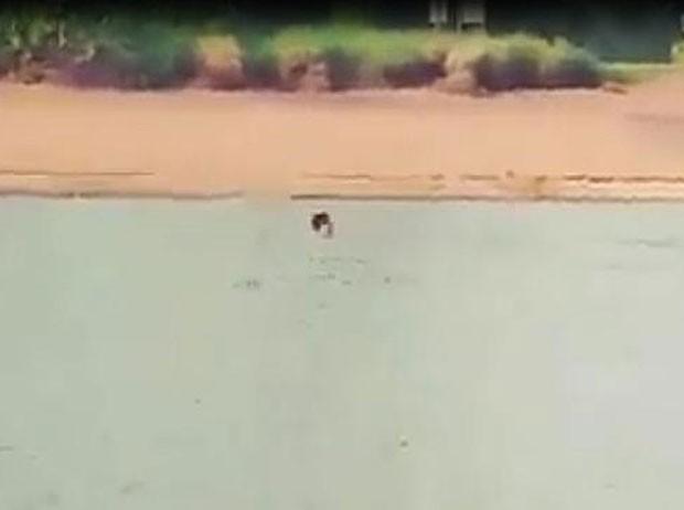 Para pagar aposta, jovem nada em rio cheio de crocodilos na Austrália