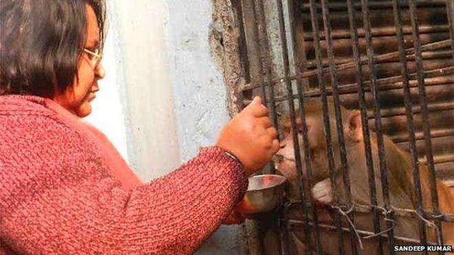 Casal indiano é rejeitado por família e decide deixar herança para macaco