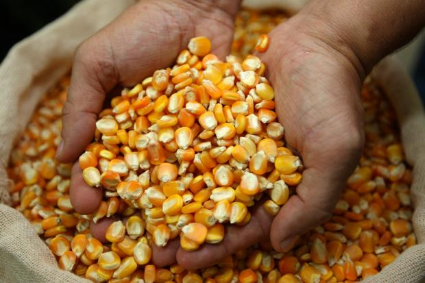 Governo do RN inicia a distribuição de sementes aos produtores rurais