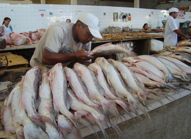 Governo distribui 120 toneladas de peixe para a Semana Santa