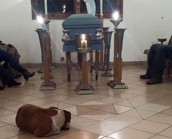 Emocionante: Cães de rua vão a funeral de mulher que os alimentava