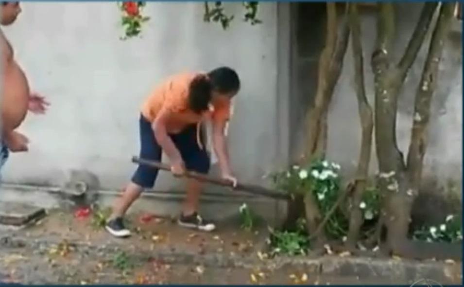 Idosa é flagrada espancando cachorro até a morte na Paraíba