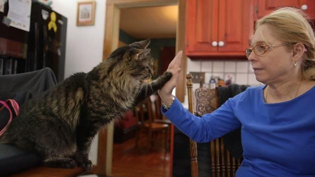 Conheça a história da deficiente auditiva que ensinou língua de sinais aos seus gatos