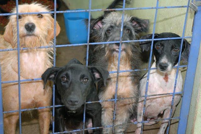Câmara aprova projeto que criminaliza maus-tratos a cães e gatos
