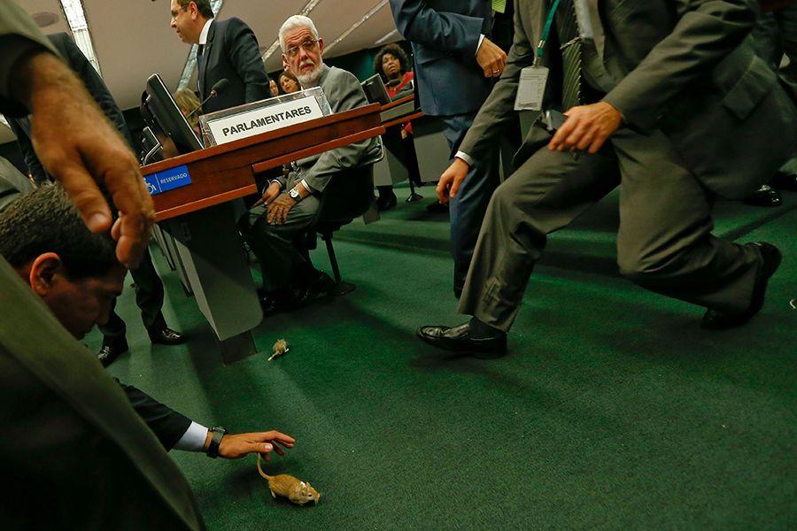 Presidente da Câmara demite servidor que soltou ratos na CPI