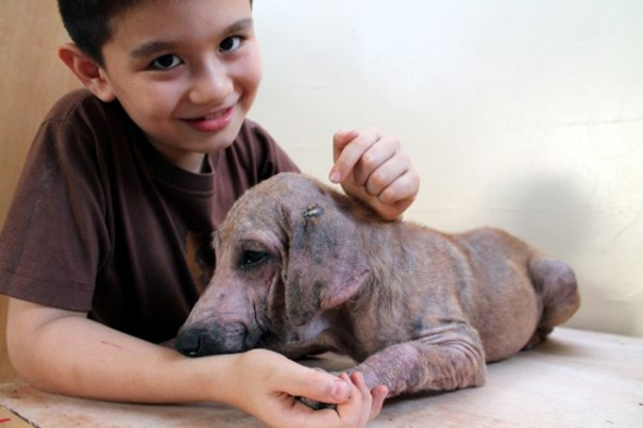 Garoto de 9 anos transforma a garagem de casa em abrigo para animais abandonados