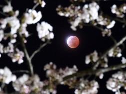 lua sangrenta4