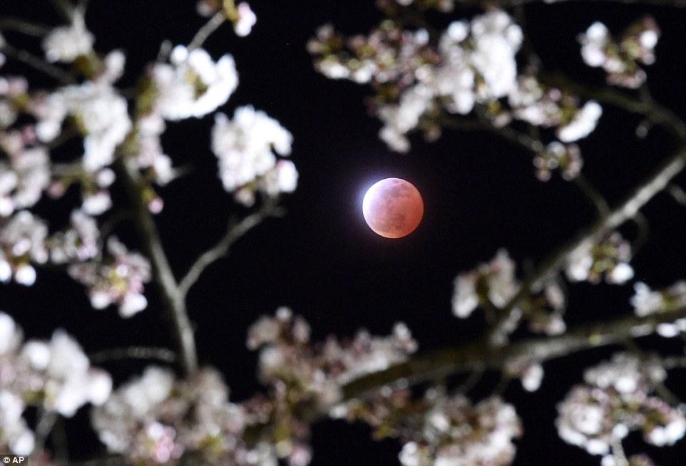 Confira imagens da 'lua sangrenta' deste sábado (4)